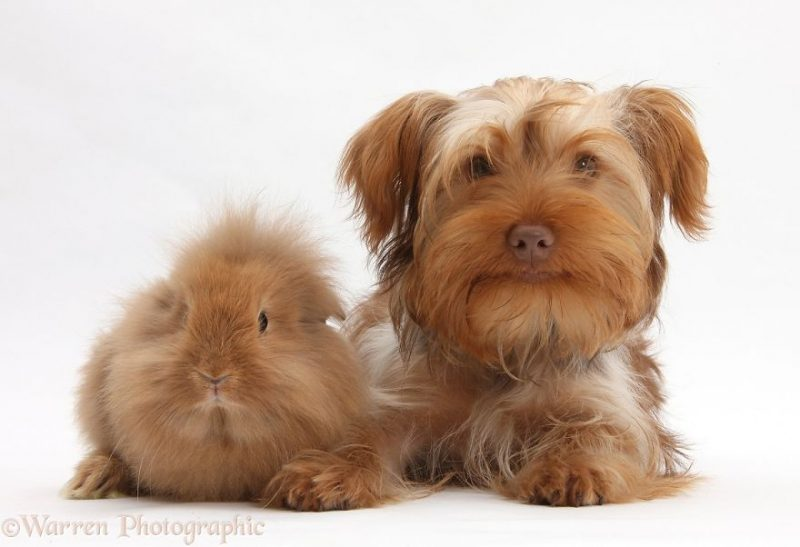 cute-matching-pets-warren-photographic-vinegret-8