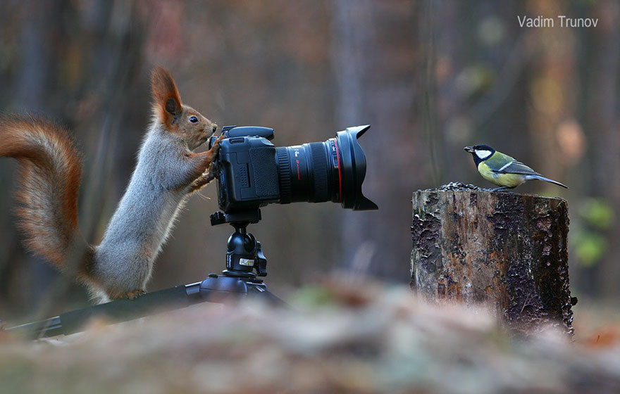 squirrel-photography-russia-vadim-trunov-vinegret-1
