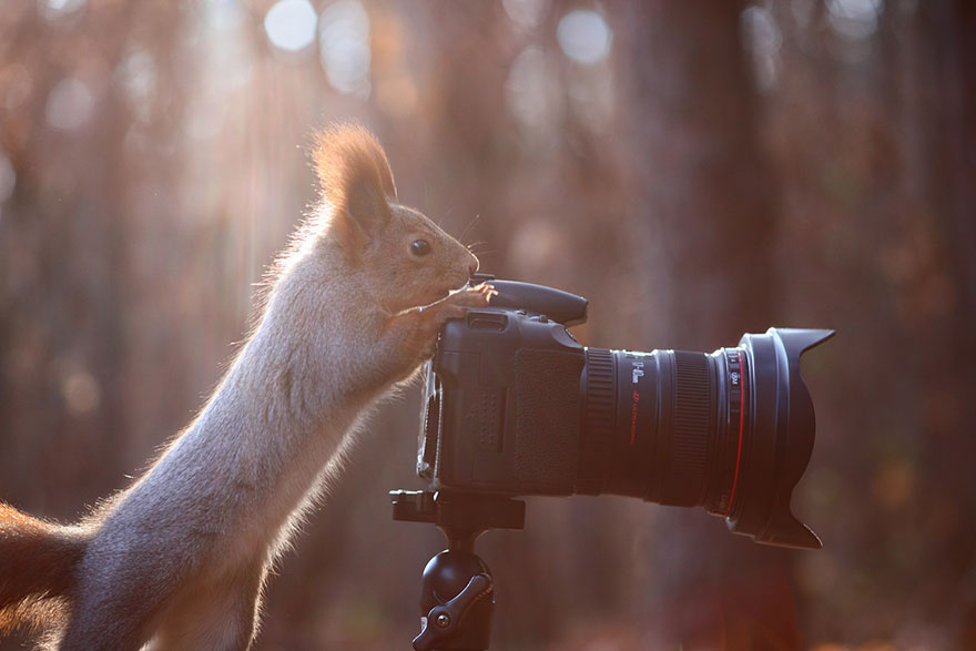 squirrel-photography-russia-vadim-trunov-vinegret-10