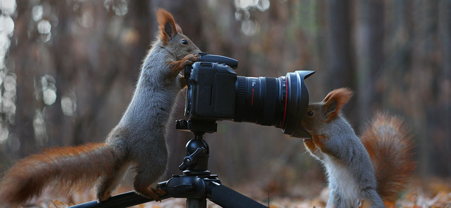 squirrel-photography-russia-vadim-trunov-vinegret-11