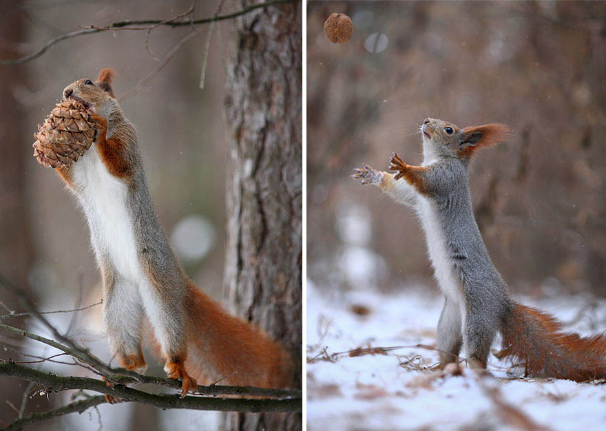 squirrel-photography-russia-vadim-trunov-vinegret-13