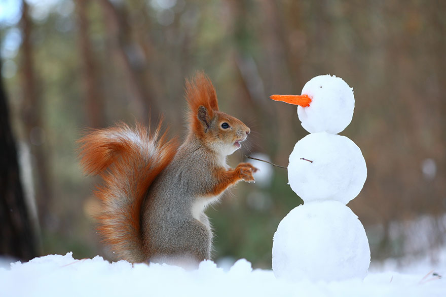 squirrel-photography-russia-vadim-trunov-vinegret-2