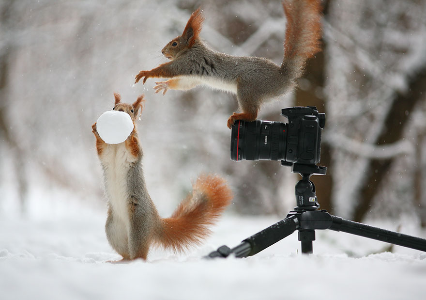 squirrel-photography-russia-vadim-trunov-vinegret-5