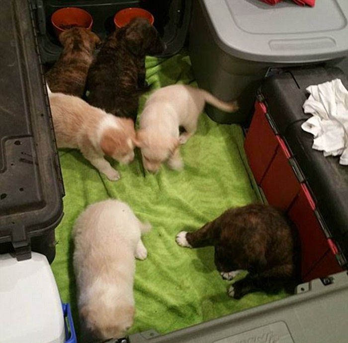bachelor-party-stray-dog-puppies-vinegret-1