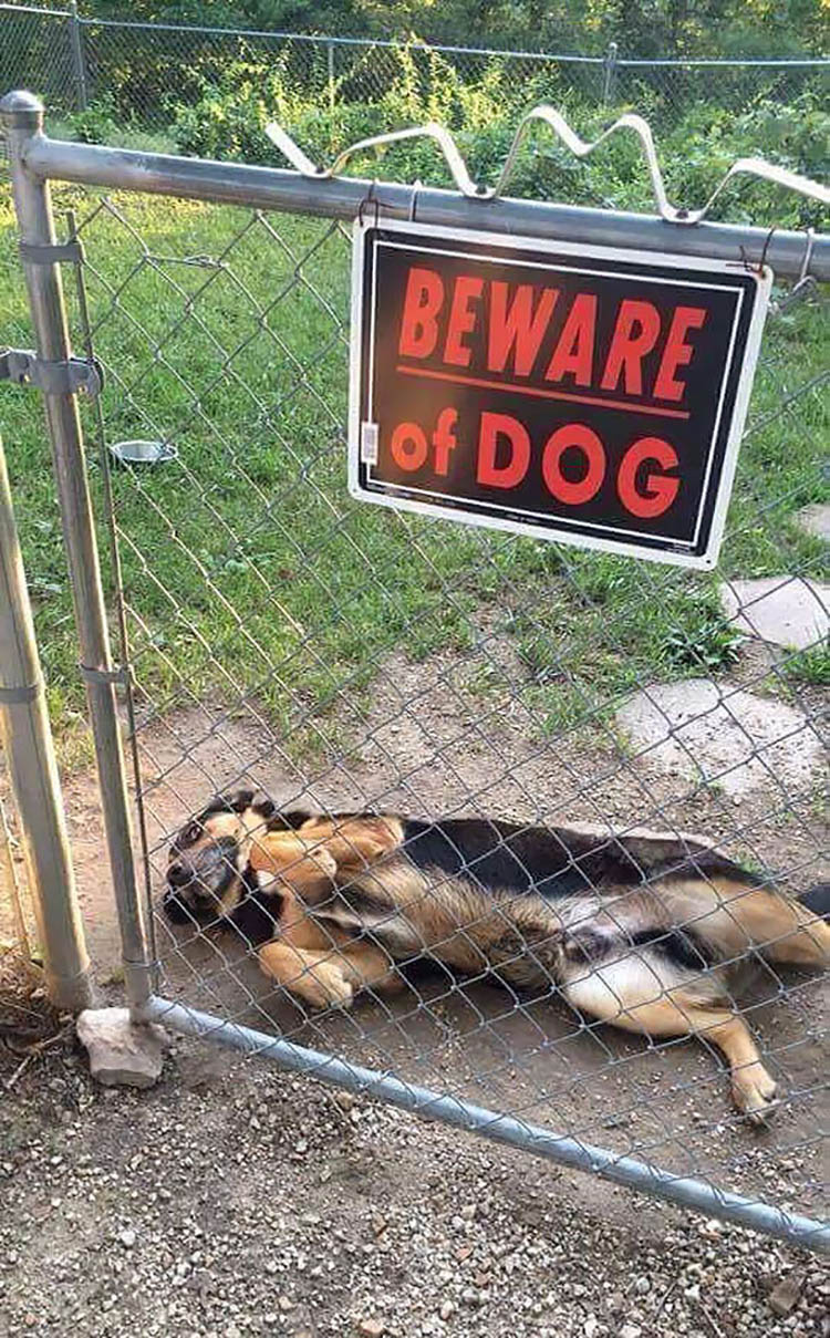 beware-of-the-dog-vinegret-1