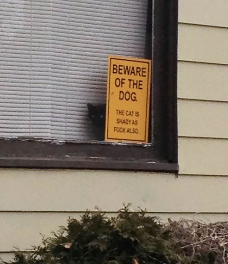 beware-of-the-dog-vinegret-2