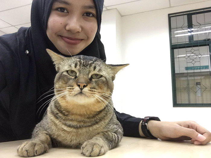 cat-sleeps-university-lecture-malaysia-vinegret-1