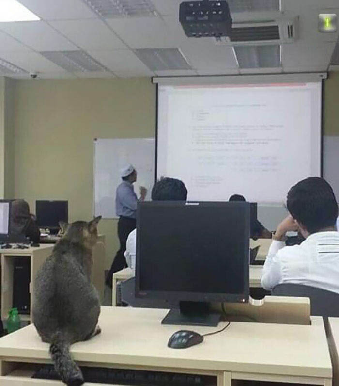 cat-sleeps-university-lecture-malaysia-vinegret-3