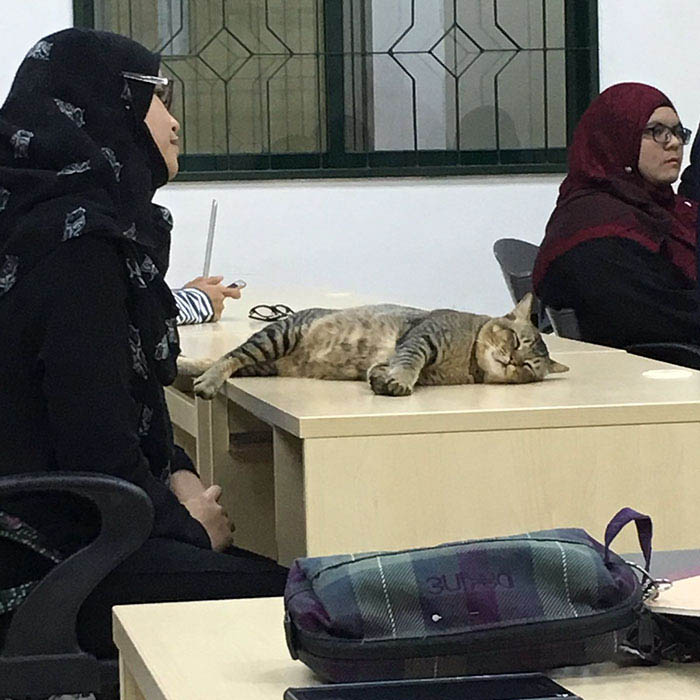 cat-sleeps-university-lecture-malaysia-vinegret-4