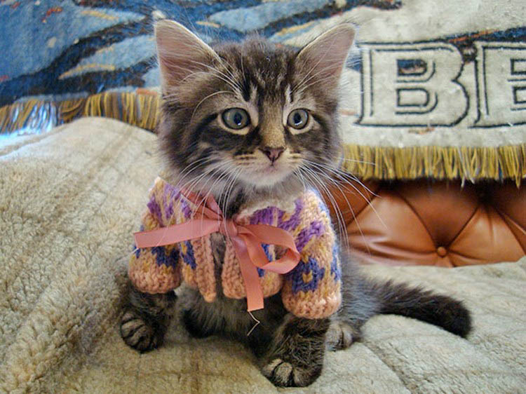 cute-animals-wearing-tiny-sweaters-vinegret-1