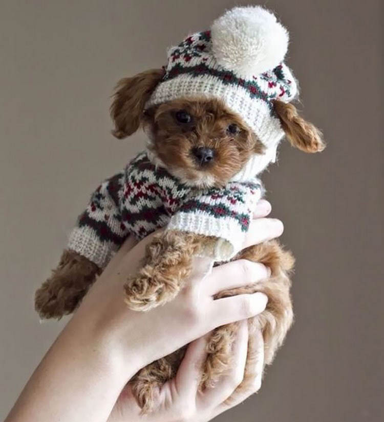 cute-animals-wearing-tiny-sweaters-vinegret-10