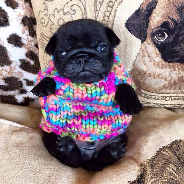 cute-animals-wearing-tiny-sweaters-vinegret-11
