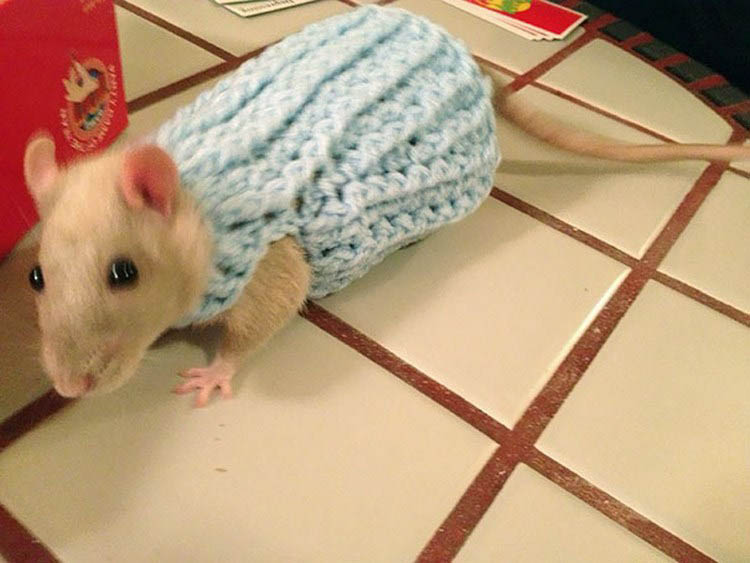 cute-animals-wearing-tiny-sweaters-vinegret-14