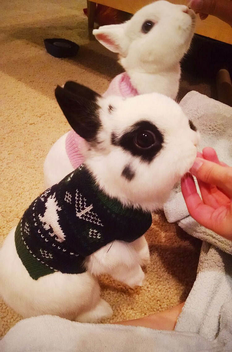 cute-animals-wearing-tiny-sweaters-vinegret-15