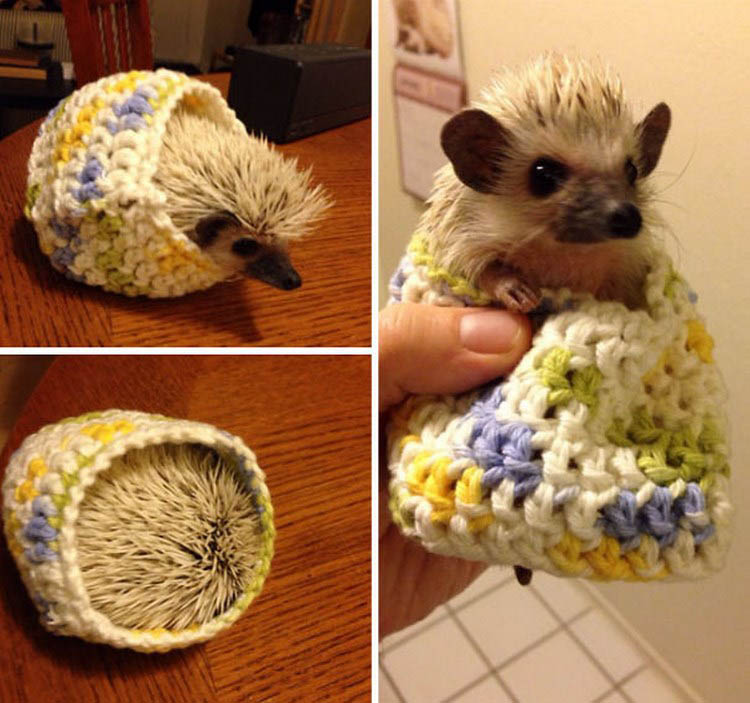 cute-animals-wearing-tiny-sweaters-vinegret-16