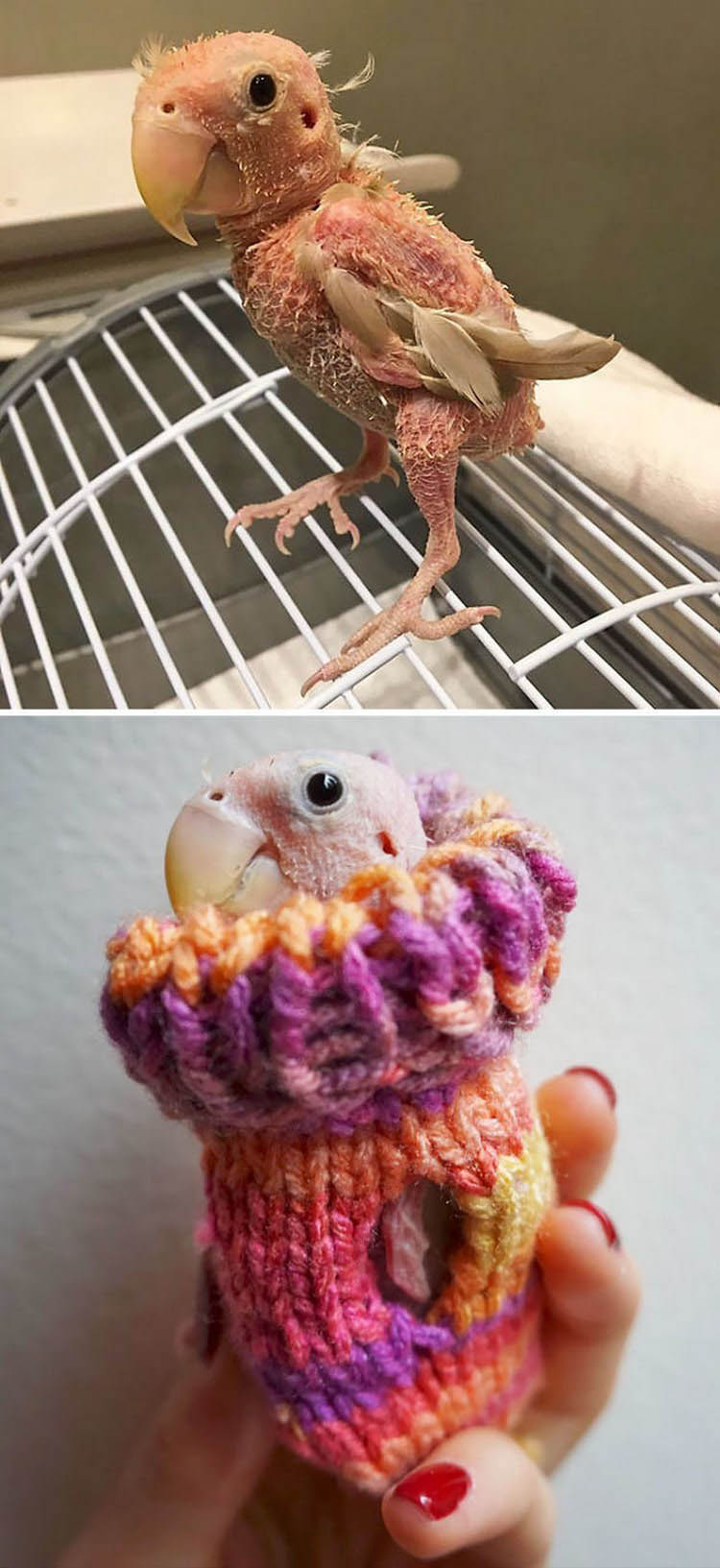 cute-animals-wearing-tiny-sweaters-vinegret-20