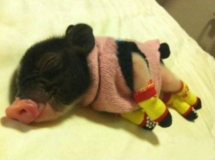 cute-animals-wearing-tiny-sweaters-vinegret-3