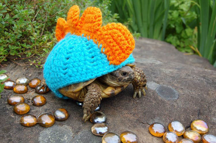 cute-animals-wearing-tiny-sweaters-vinegret-6