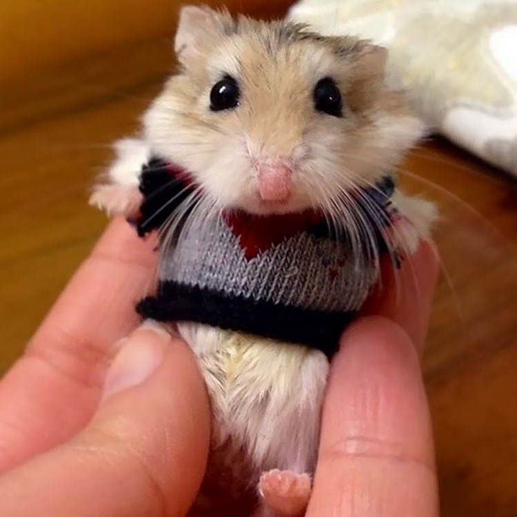 cute-animals-wearing-tiny-sweaters-vinegret-8