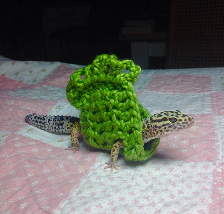 cute-animals-wearing-tiny-sweaters-vinegret-9