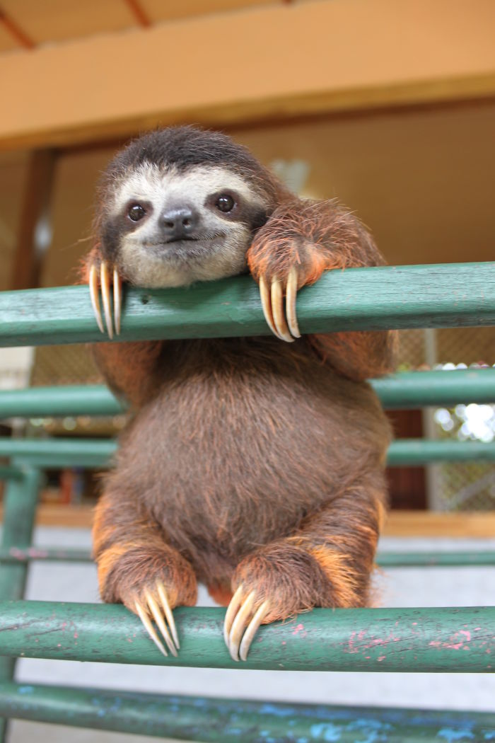 cute-sloths-vinegret-2