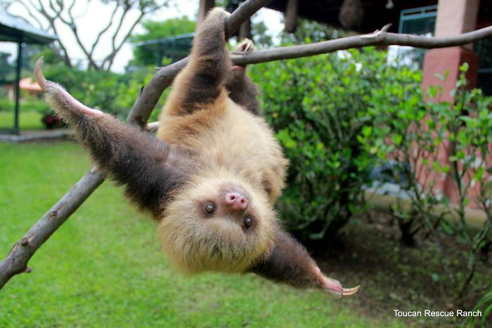 cute-sloths-vinegret-6