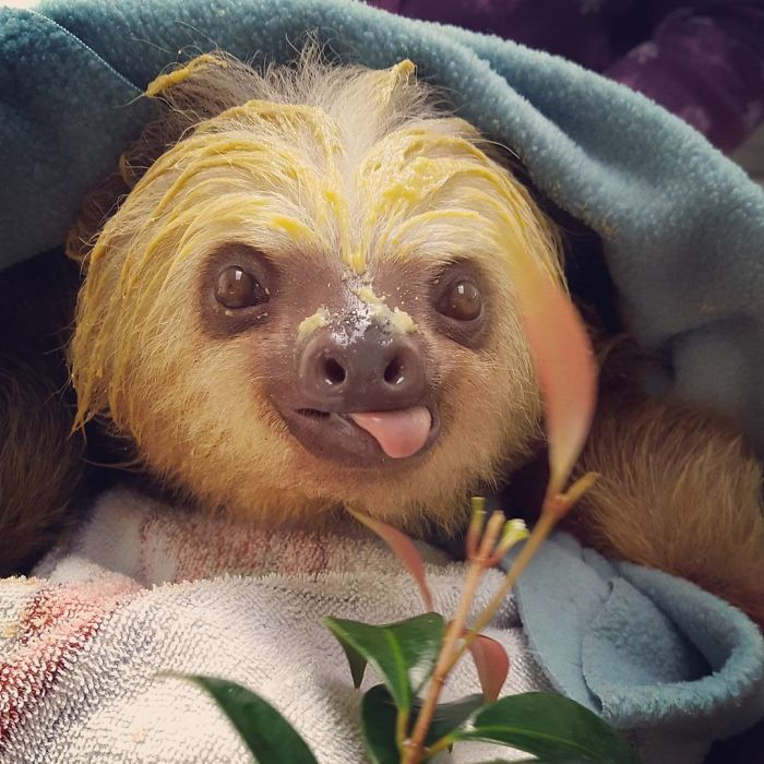 cute-sloths-vinegret-9