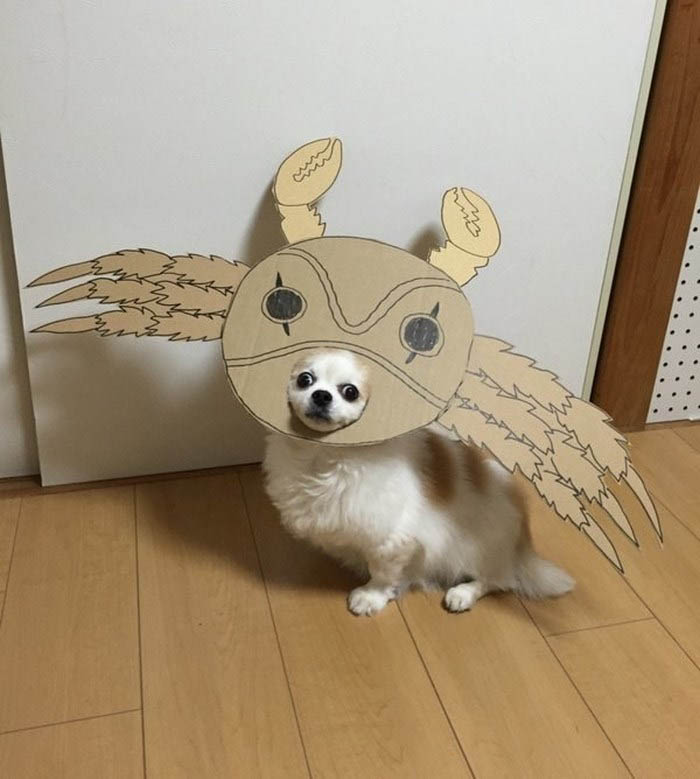dog-costume-cardboard-cutouts-myouonnin-vinegret-13