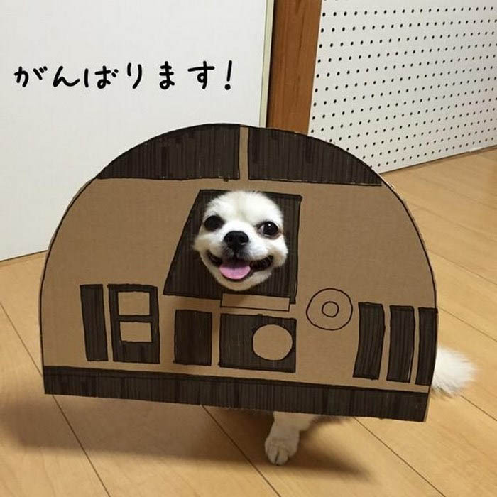 dog-costume-cardboard-cutouts-myouonnin-vinegret-15