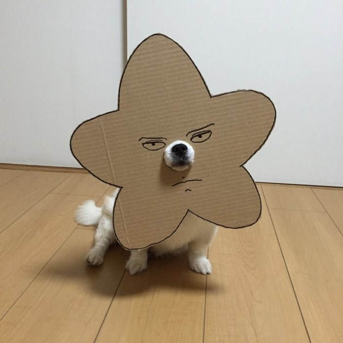 dog-costume-cardboard-cutouts-myouonnin-vinegret-16