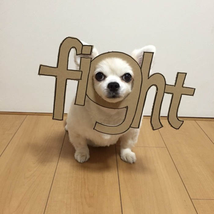 dog-costume-cardboard-cutouts-myouonnin-vinegret-19