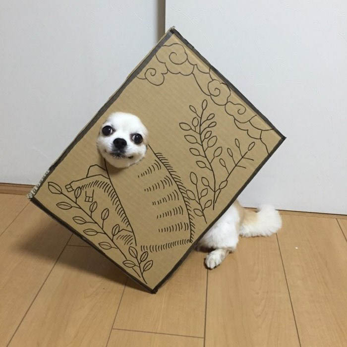 dog-costume-cardboard-cutouts-myouonnin-vinegret-5