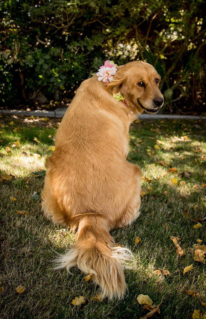 dog-maternity-photo-shoot-chanel-kennedy-sorensen-vinegret-2