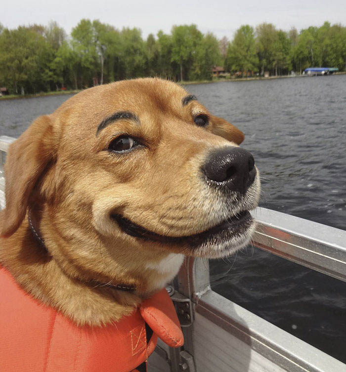 funny-dogs-with-eyebrows-vinegret-13