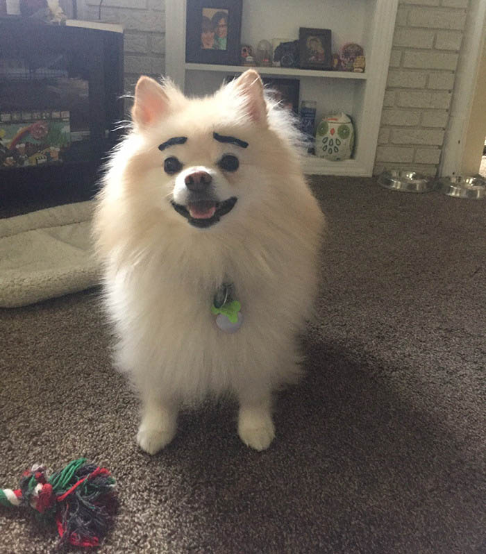 funny-dogs-with-eyebrows-vinegret-14