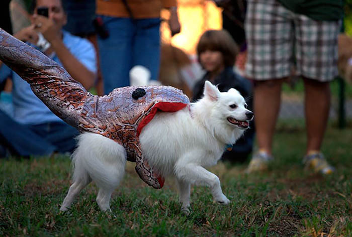 halloween-dog-costumes-vinegret-13