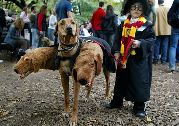 halloween-dog-costumes-vinegret-2