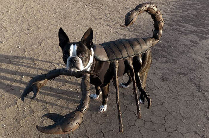 halloween-dog-costumes-vinegret-4