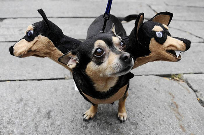 halloween-dog-costumes-vinegret-5