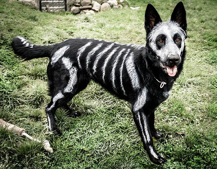 halloween-dog-costumes-vinegret-6