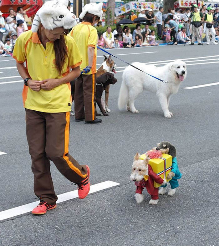 halloween-dog-costumes-vinegret-9