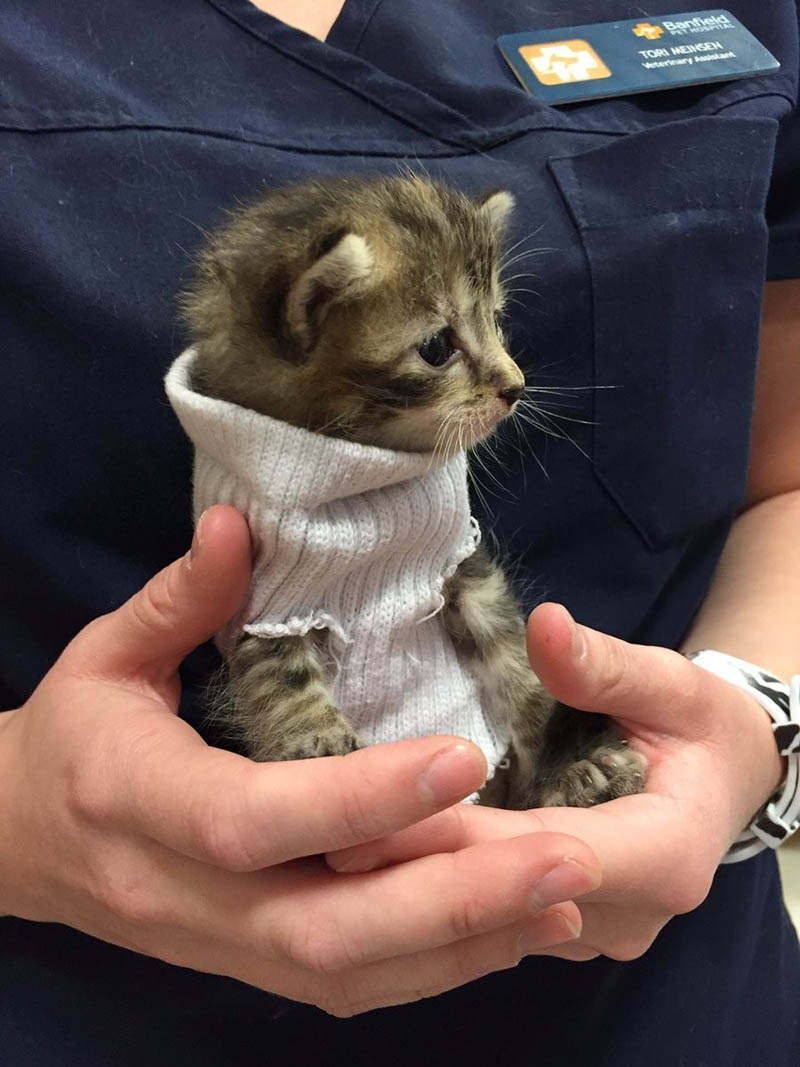 kitten-tube-sock-sweater-hurricane-matthew-vinegret-3