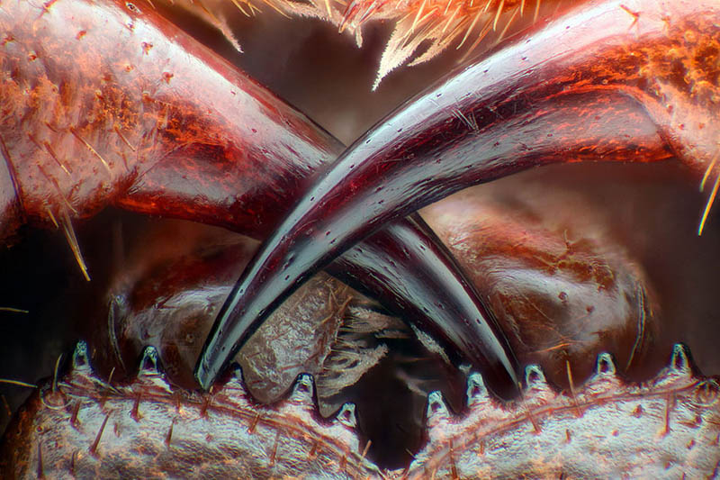 nikon-small-world-photography-winners-2016-vinegret-13