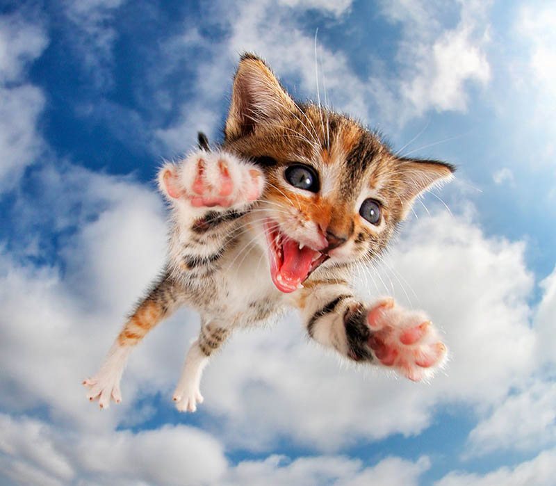 pounce-new-kitten-book-by-seth-casteel-vinegret-9