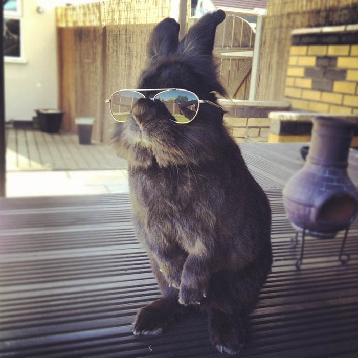 rabbit-wears-sunglasses-photoshop-battle-vinegret-1-1