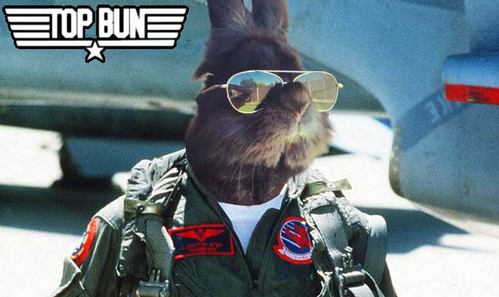 rabbit-wears-sunglasses-photoshop-battle-vinegret-1-10