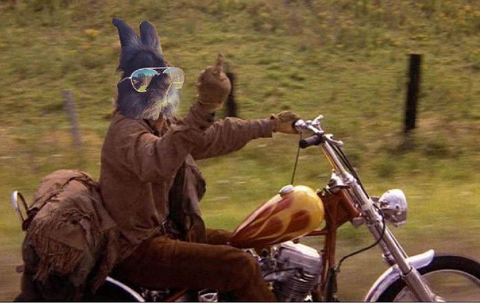 rabbit-wears-sunglasses-photoshop-battle-vinegret-1-9