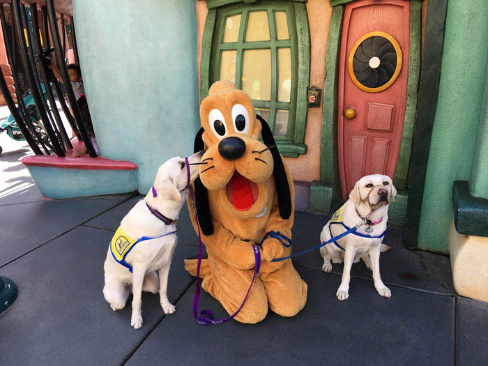 service-dog-caricature-disneyland-vinegret-7