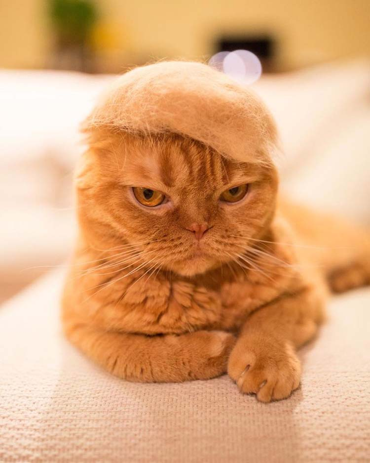 cats-in-hats-made-from-their-own-hair-vinegret-1
