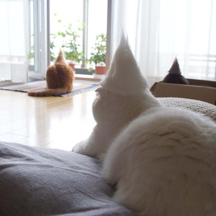 cats-in-hats-made-from-their-own-hair-vinegret-10